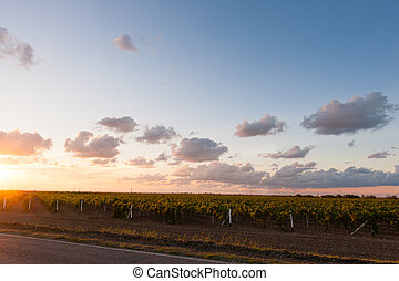 Sunset evening clouds over road along the vineyard