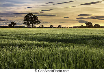 Sunset - Farmland - Agriculture