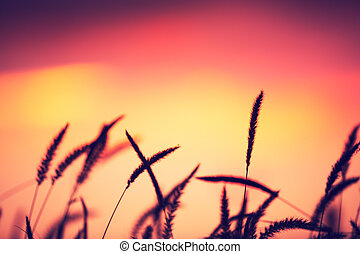 Sunset Field, Beautiful Vibrant Color. Abstract Shallow...