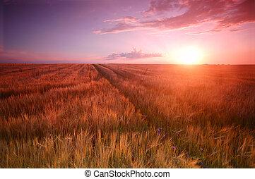 Sunset field scenery with Cross shape in wheat