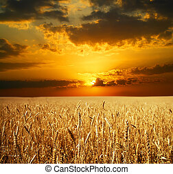 Sunset Field with ears of wheat