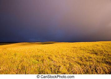 Sunset Golden Field - Amazing Landscape at Sunset, Gold ...