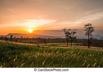 Sunset grass meadow on slope hill and silhouette tree mountain background