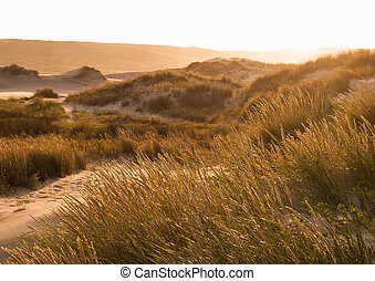 Sunset in a dune of the beach