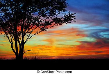 Sunset in a field