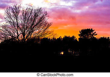 sunset in a forest landscape creating dark silhouette of the scenery, sundown painting the sky and clouds in beautiful colors