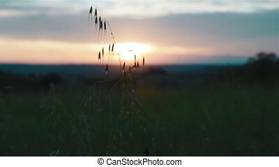 Sunset in a meadow with grasses