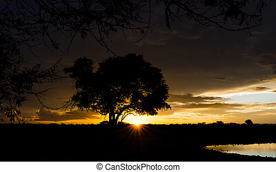 Sunset in Africa with a waterhole in the front (Etosha...
