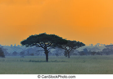 Sunset in Africa - Sunset is so beautiful in Africa.