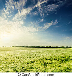 sunset in deep blue sky over green agriculture field