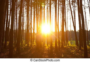 Sunset in forest