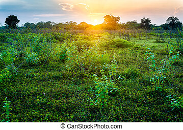 sunset in grass field