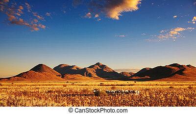Sunset in Kalahari Desert