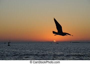 Sunset in Key West, Florida USA