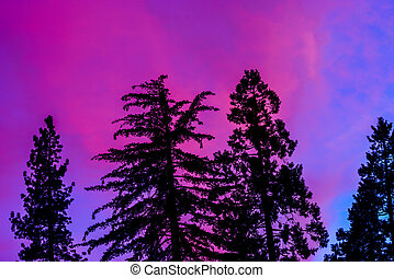 Sunset in Kings Canyon National Park in California, USA
