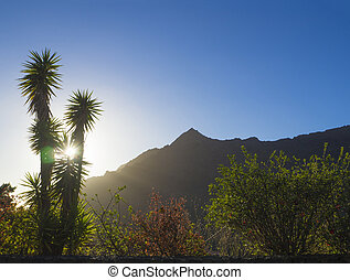 sunset in masca village, sun against palm tree, green and red bush and mountain peak, lens flare, blue sky backgound