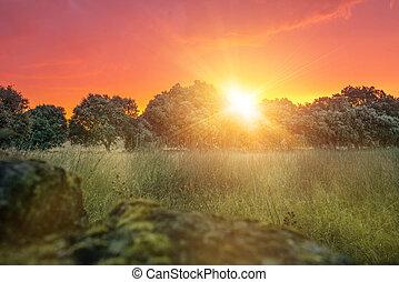 Sunset in Spanish field