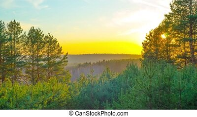 sunset in spring forest, time-lapse