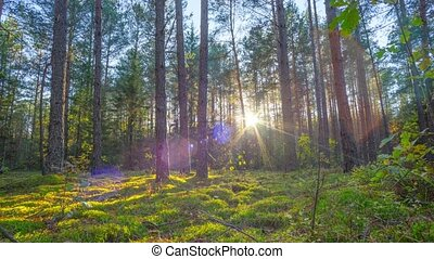 Sunset in the autumn magic forest,