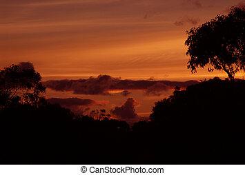 Sunset in the Bush - Orange Sunset in the Bush