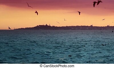 Sunset in the city sea and birds.