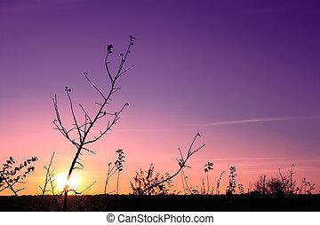 Sunset in the fall (II)
