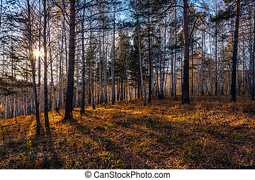 Sunset in the forest