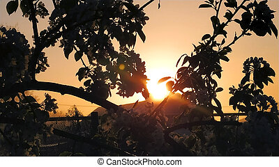 Sunset in the garden. Fruit trees in the evening in the garden.