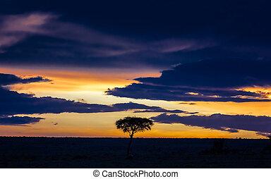 Sunset in the Masai Mara with acacia tree silhouette horizontal