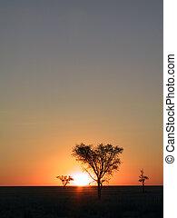 Sunset in the savanna