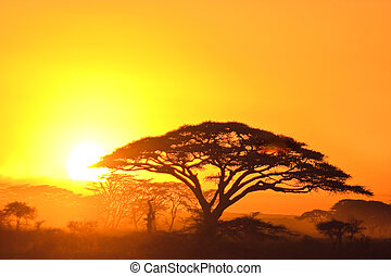 Sunset in the serengeti with beautiful colors