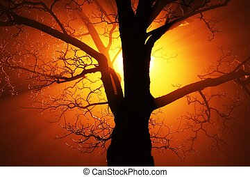 Beautiful Sunset on the tree