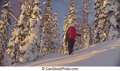 Sunset in the winter forest. A man skiing skitour