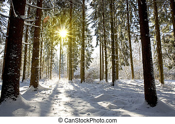 Sunset in winter forest. - Sun light in the winter forest...