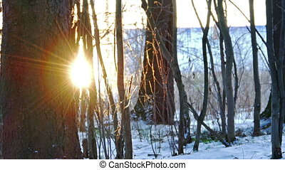 Sunset in Winter Forest, Shot with Slider