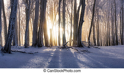 Sunset in winter forest with mist rays, tree ladnscape