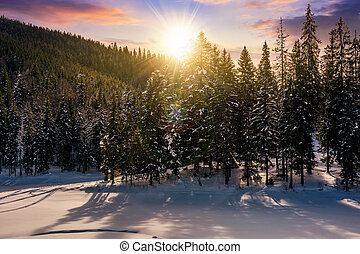 sunset in winter spruce forest. beautiful scenery with...