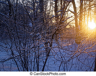 sunset in winter through the trees