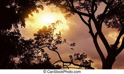 Sunset Jungle With Birds Flying Past
