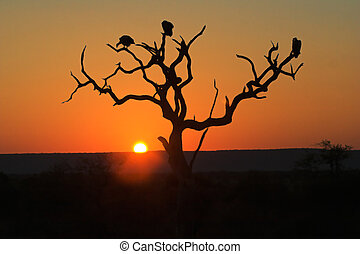 Sunset in Kruger Park - three vultures are perching on dead tree.;
