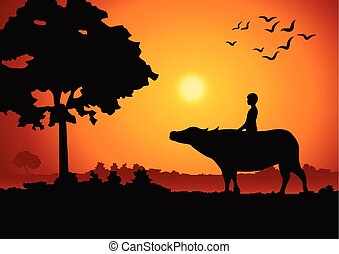 sunset landscape and country life with a boy ride on buffalo back around with tree.countryside of east lifestyle
