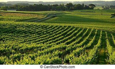 Sunset landscape bordeaux wineyard france, europe Nature, ...