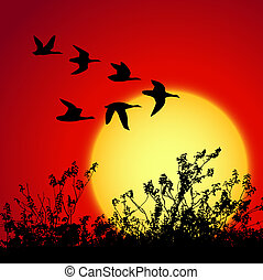 sunset landscape - landscape in sunset with silhouette birds
