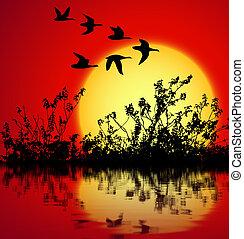 sunset landscape - landscape on sunset with silhouette birds...