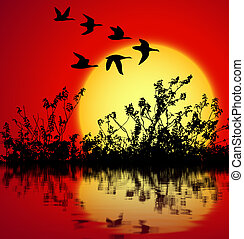 sunset landscape - landscape on sunset with silhouette birds...