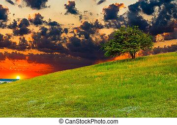 sunset landscape mountain sky green forest nature hill view summer blue grass tree