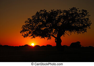 Blazing red sunset and silhouette of a live oak tree.
