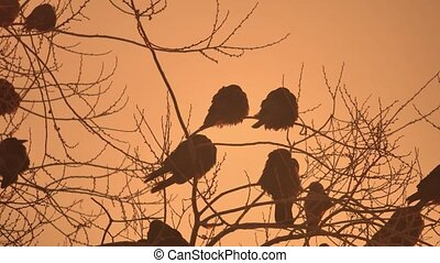 sunset nature crows flock of birds sitting on the tree winter cold