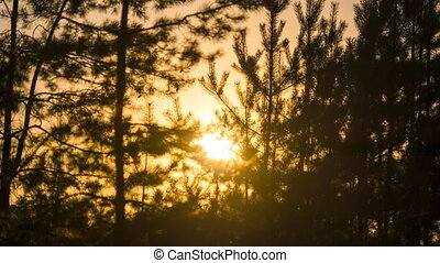 Sunset of the Orange Sun in the Forest through the Branches of Trees. Timelapse. Summer Forest at Sunset. Sundown in the wood. Calming relaxing nature. Real nature background in the rays of red sun