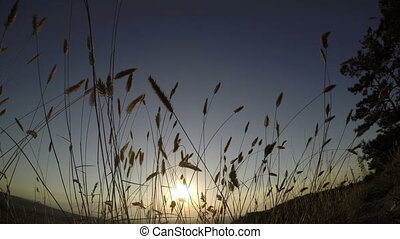 sunset on a background of tall grass 4k